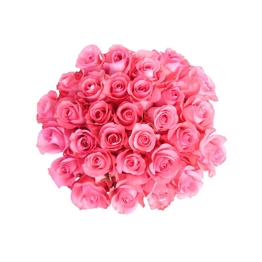 pink love roses