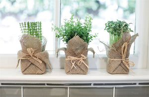"7""H Burlap Wrapped Artificial Potted Herb, 3 Styles"