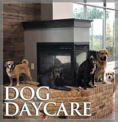 Doggie Daycare at Canvasback in Lockport