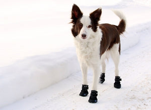 Ultimate Trail Boot Canine Equipment