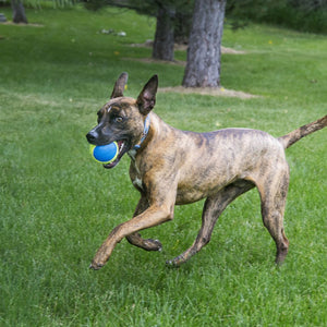 KONG Air Dog SQ Ball MED-Ultra