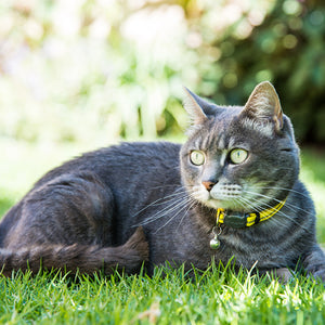 "Rogz Reflective Cat Collar 8-12"" *WHILE STOCKS LAST*"