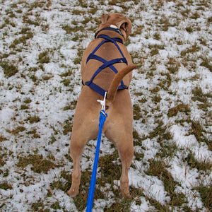 X-Back Pulling Harness Medium (Kicksledding Skijoring)