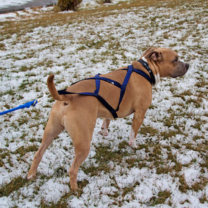 X-Back Pulling Harness Large (Kicksledding Skijoring)