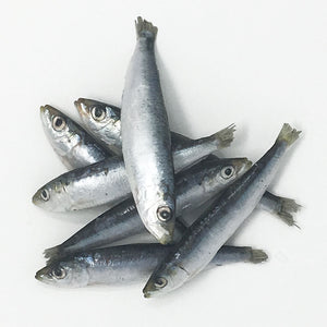 SARDINES BCR 1LB BAG  BIG COUNTRY RAW