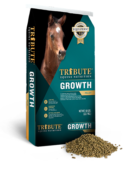 Tribute Growth 16% Horse Feed