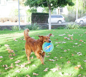 Outward Hound Soft Fetch Flyer 6.75""