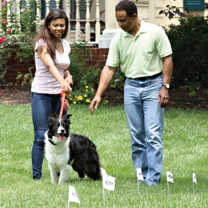 Pet Safe Boundary Flags 50-Pk