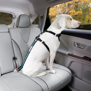 KURGO Direct Seatbelt Tether