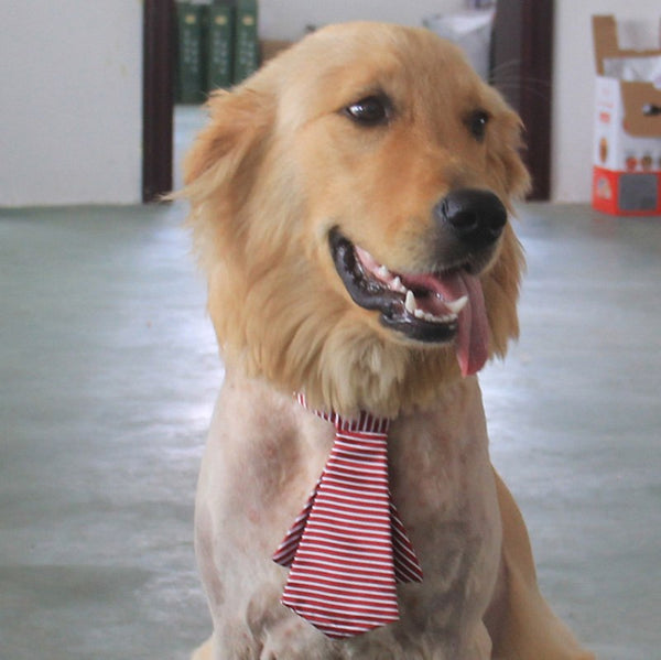 Pet Grooming Collar Tie -  200003775 - ShaadiMagic