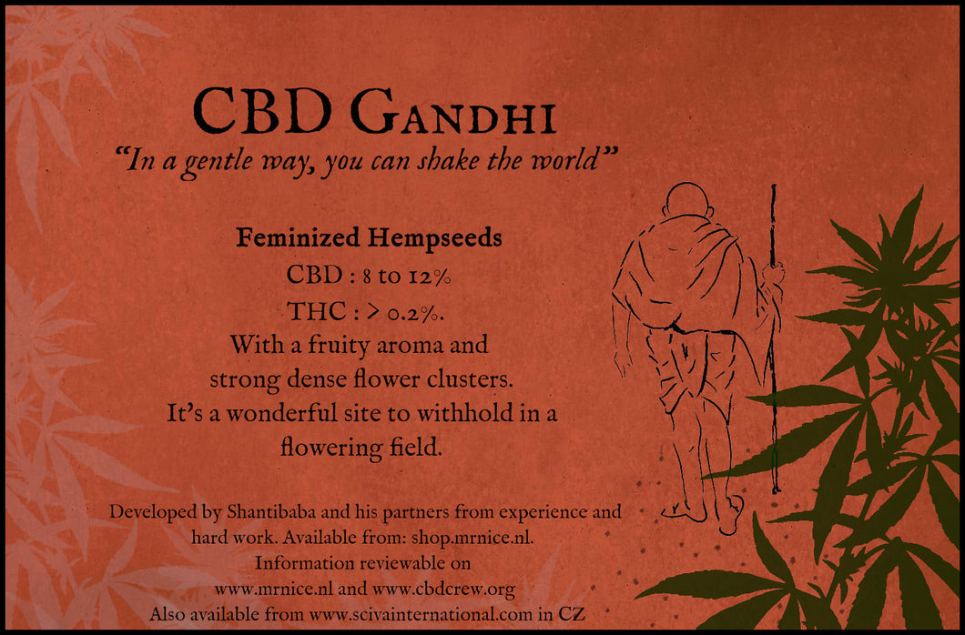 CBD Gandhi 5 feminized seeds per packet