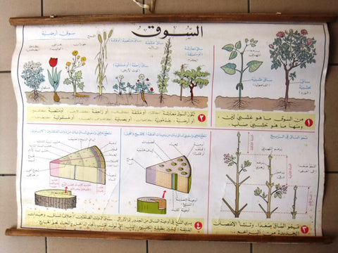 Plant نبتة السوق ملصق Educational Arabic Original Lebanese School Poster 1974