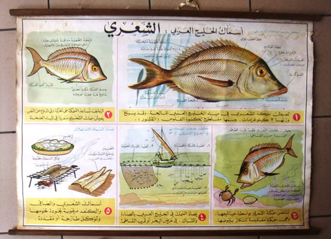 أسماك الخليج العربي Fish Educational Arabic Original Lebanese School Poster 1968