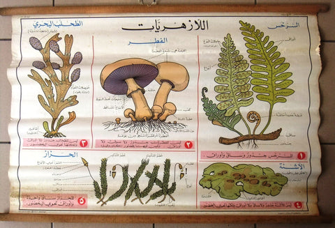 الأزهريات الفطر Mushroom Educational Arabic Original Lebanese Poster 1966
