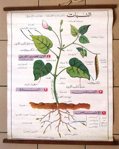 النبات Planets Educational Arabic Original Lebanese Poster 1972