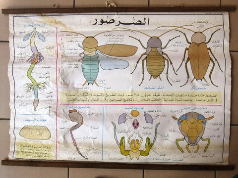 Cockroach الصرصور ملصق Educational Arabic Original Lebanese School Poster 1974