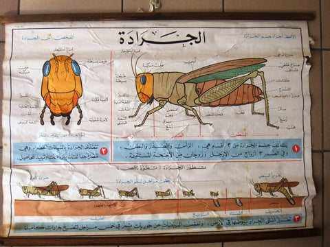 Locust الجراد Educational Arabic Original Lebanese School Poster 1968