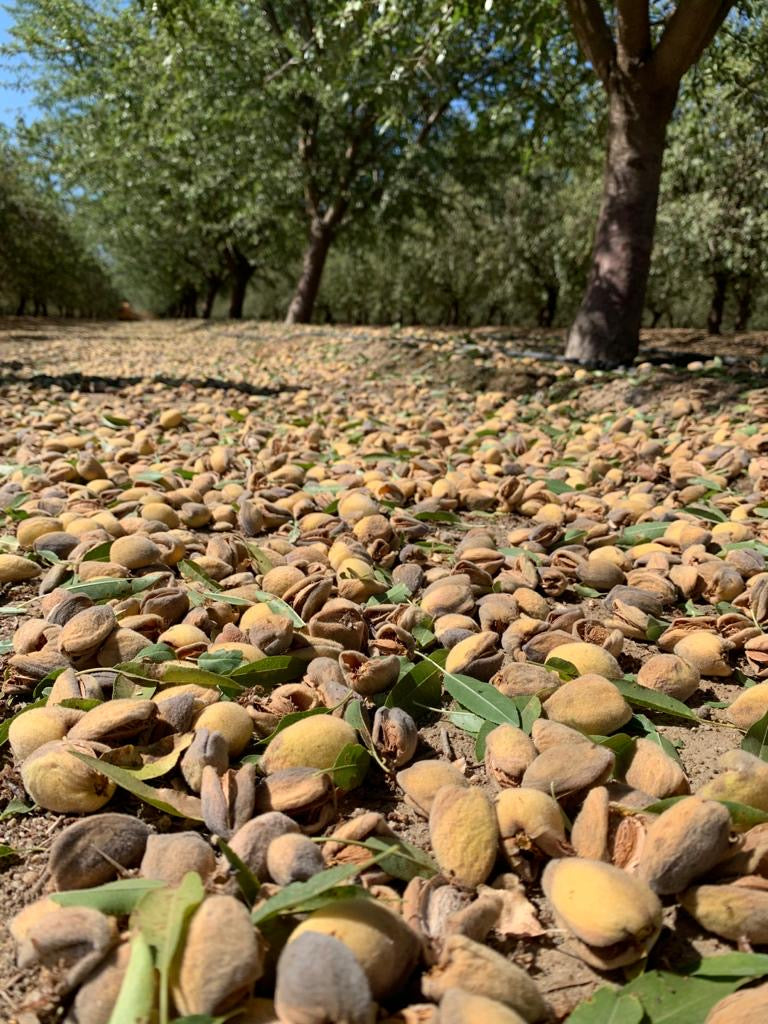 JOI: Meet Our Almond Farmers