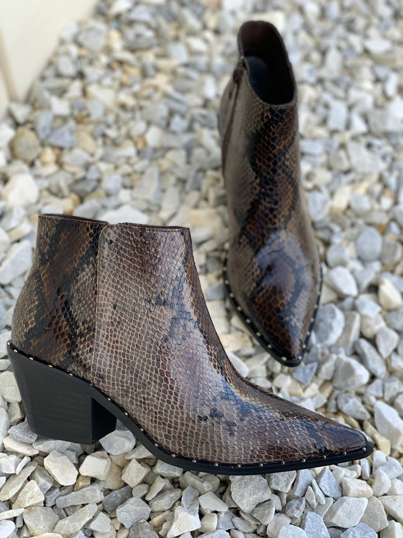 Charles David Plato Dark Brown Snake