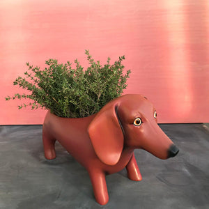 Michelle Allen: Planter Oscar Brown Dog
