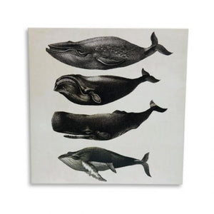 Greeting Card: Whale Chart