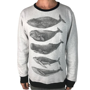 Whales Grey Marle Jumper