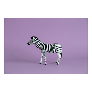 Top to Tail: Zebra Paper Model Kit