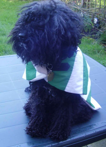Celtic FC dog coat