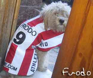 Athletico Madrid fan Frodo