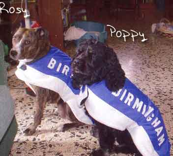 Birmingham City dog coat