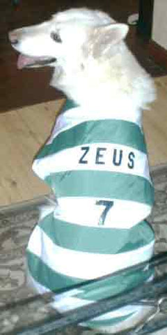 Celtic FC dog shirt