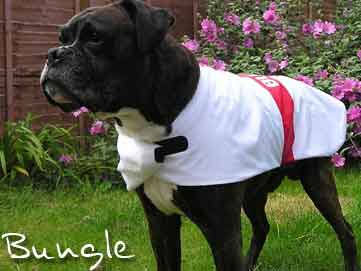 England St Georges Cross dog coat