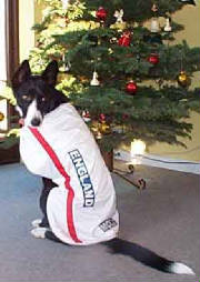 England dog coat