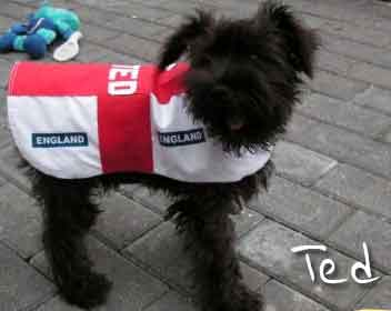 England St Georges Cross dog shirt