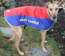Inverness Caley Thistle dog coat