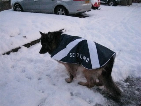 Scotland dog coat