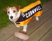 Cornwall rugby dog coat