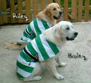 Shamrock Rovers dog coat