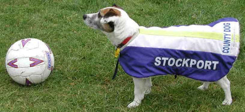 Stockport County dog coat