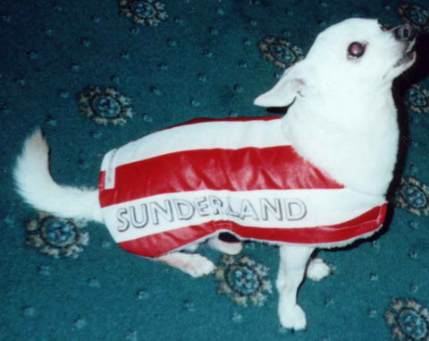 Sunderland dog replica shirt
