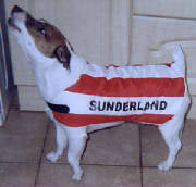 Sunderland AFC dog coat