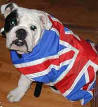 union jack dog coat