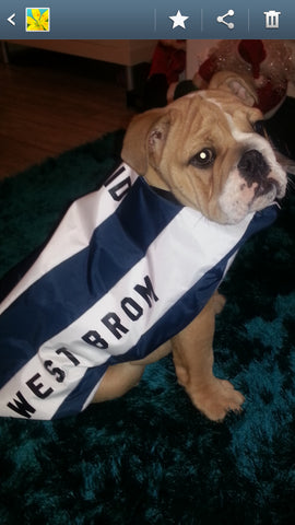 West Brom dog coat