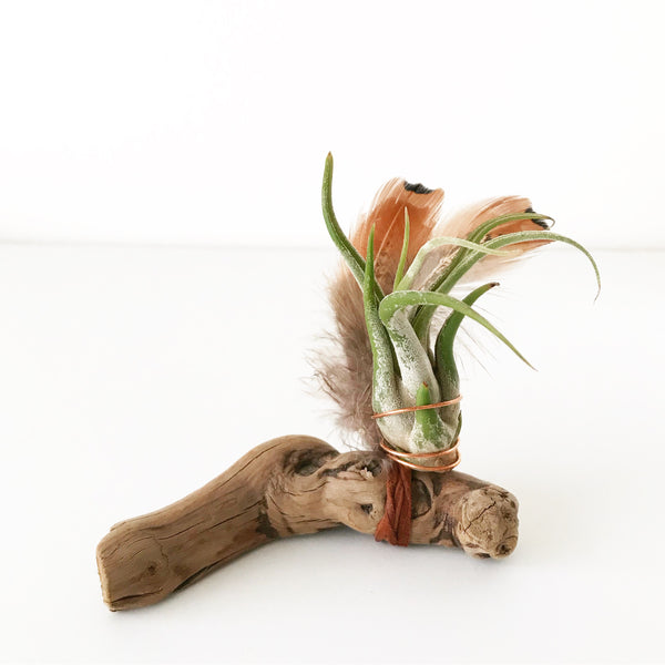 Boho feather air plant