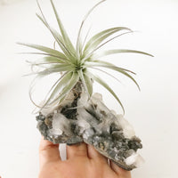 Apophlite crystal with airplant