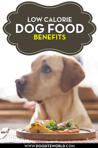 Balanced Dog Food Diet Explained
