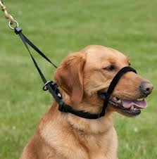 Head Halters for Dogs