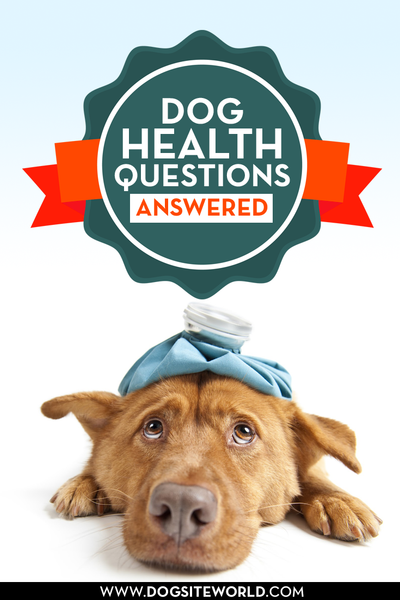 Dog Health Questions Answered