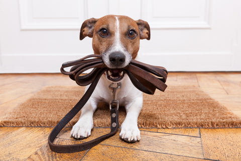 How to find the perfect lead and leash. DogSiteWorld