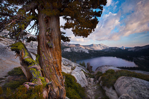 Juniper and Tenaya Lake